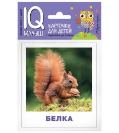 Обучающие карточки Айрис пресс Умный малыш Кто живёт в лесу 43080