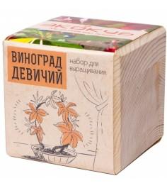 Набор выращиваем растения Экокуб Виноград Девичий ECB-01-16