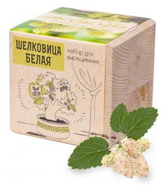 Набор выращиваем растения Экокуб Шелковица Белая ECB-01-17